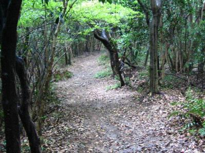 秋雨の清水路 150