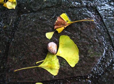 秋雨の清水路 241