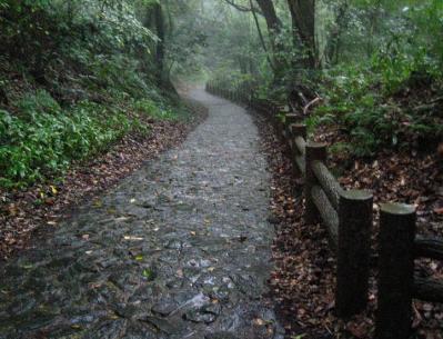 秋雨の清水路 231