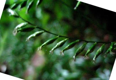 秋雨の清水路 273