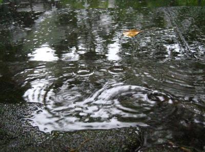 秋雨の清水路 249