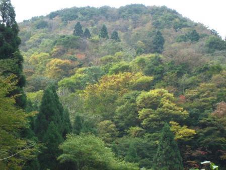 前津江村 073