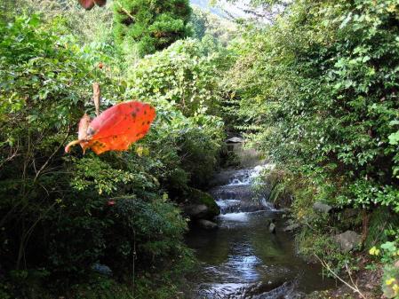 鹿嵐山 016