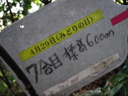 鹿嵐山 040