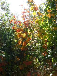 鹿嵐山 118