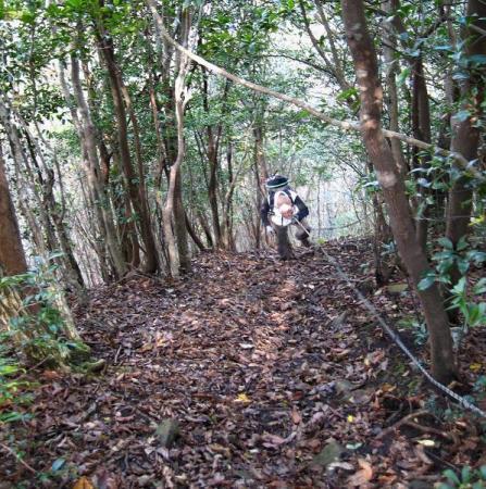 鹿嵐山 155