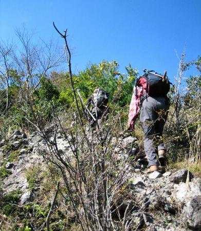 鹿嵐山 264