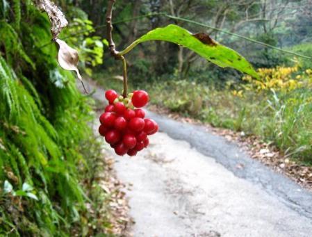 清水の山路歩き 010