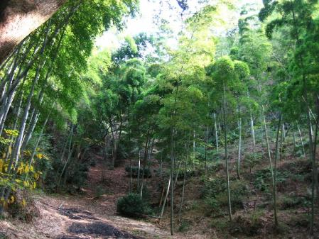 清水の山路歩き 079