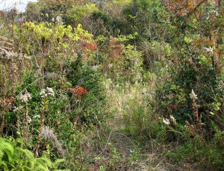 清水の山路歩き 097