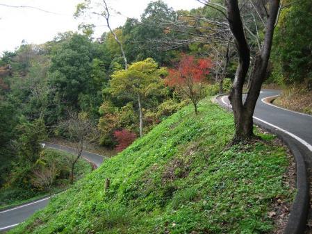 清水の山路歩き 158