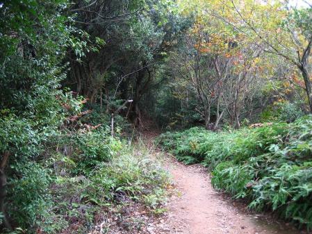 清水の山路歩き 169