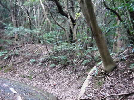 清水の山路歩き 186