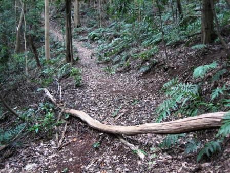清水の山路歩き 202
