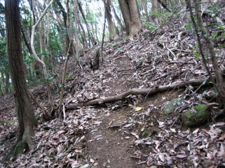 清水の山路歩き 190