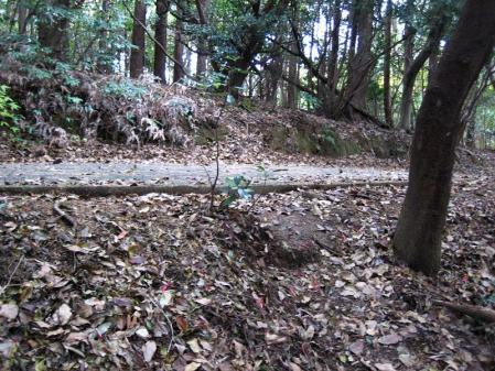 清水の山路歩き 214