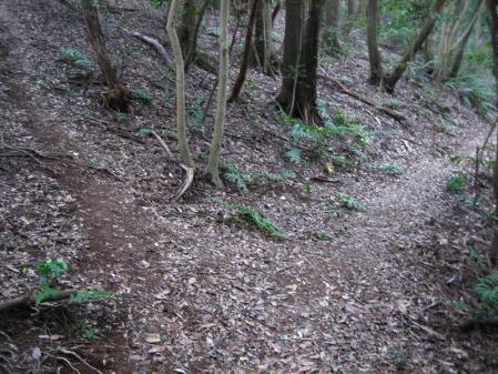 清水の山路歩き 205