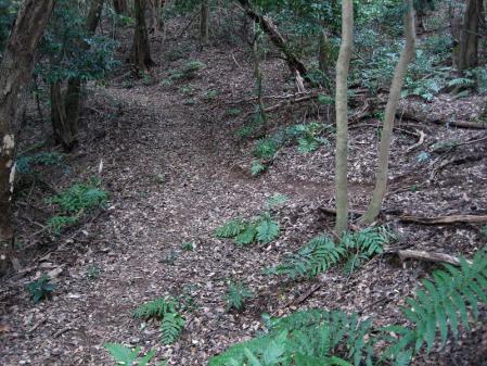 清水の山路歩き 206