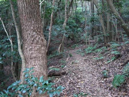 清水の山路歩き 204