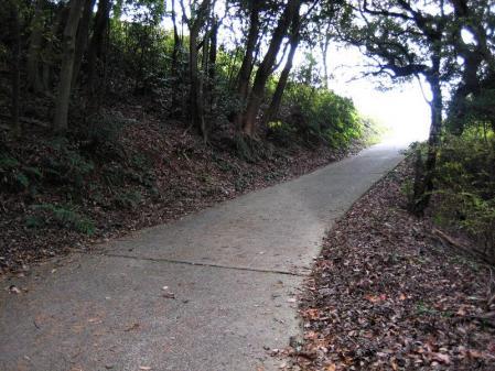 清水の山路歩き 216