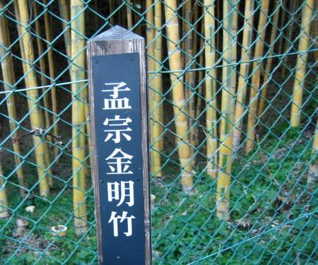 高良山ウォーキング 194