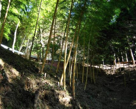 高良山ウォーキング 199