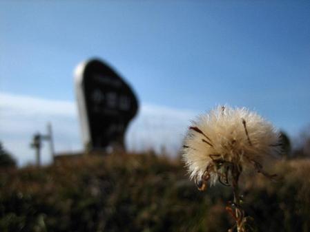 小岱山の花 089