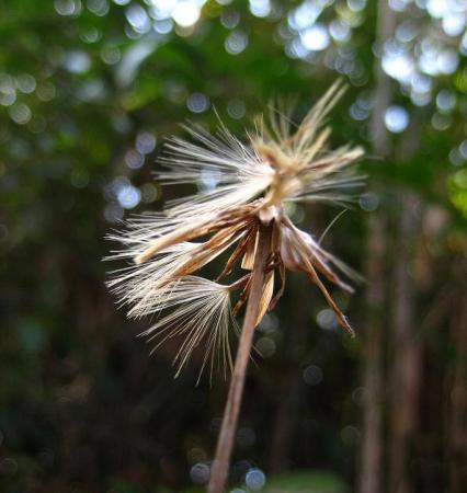 小岱山の花 081