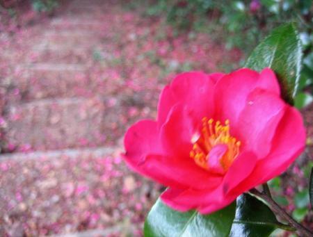 小岱山の花 106