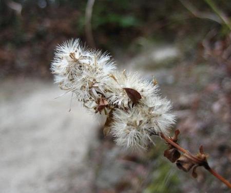 小岱山の花 121