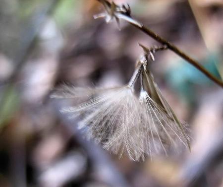小岱山の花 138