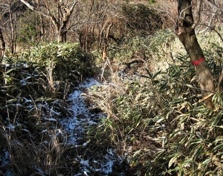 天山 コクラン植え 089