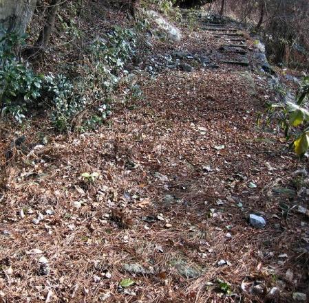 天山 コクラン植え 117
