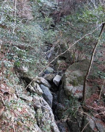 天山 コクラン植え 153