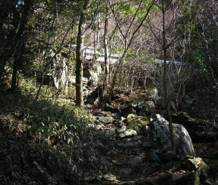 天山 コクラン植え 167