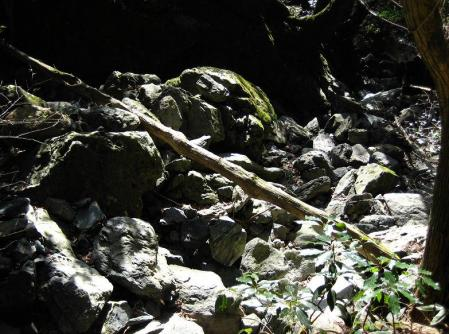 天山 コクラン植え 189