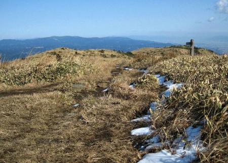 天山 コクラン植え 239