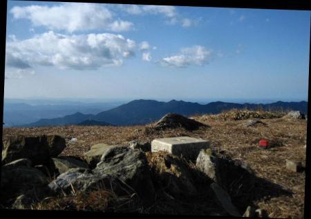 天山 コクラン植え 233