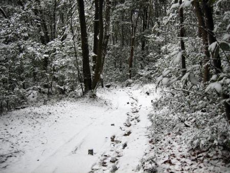 小岱山の雪 192
