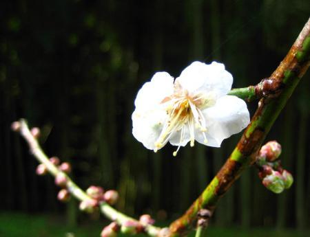 清水にに春が来た 086