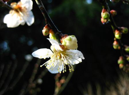 清水にに春が来た 082