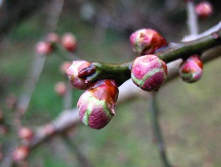 清水にに春が来た 059