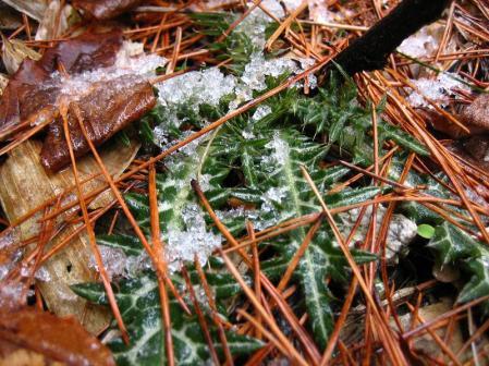 天山の樹氷 035
