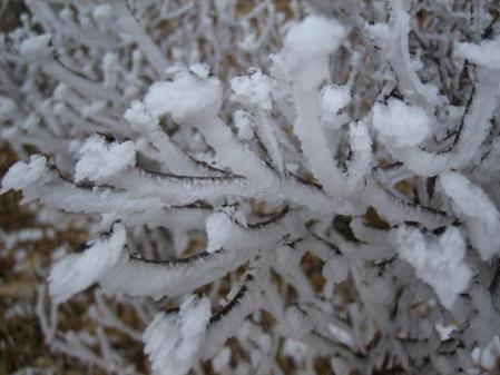 天山の樹氷 078
