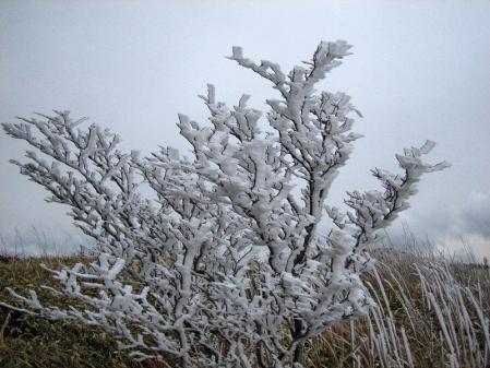 天山の樹氷 093