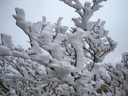 天山の樹氷 092