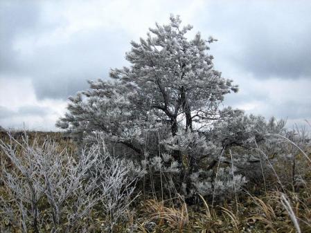天山の樹氷 103