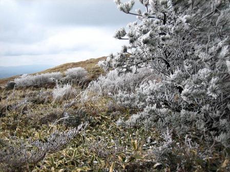 天山の樹氷 102