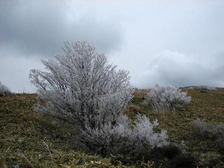 天山の樹氷 100