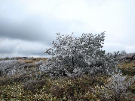 天山の樹氷 099